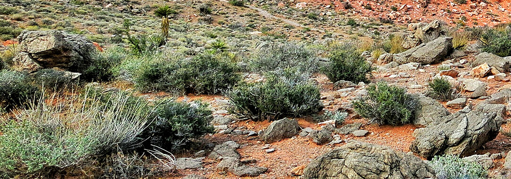 Cuyamaca Rancho State Park Camping & Hiking Exploration